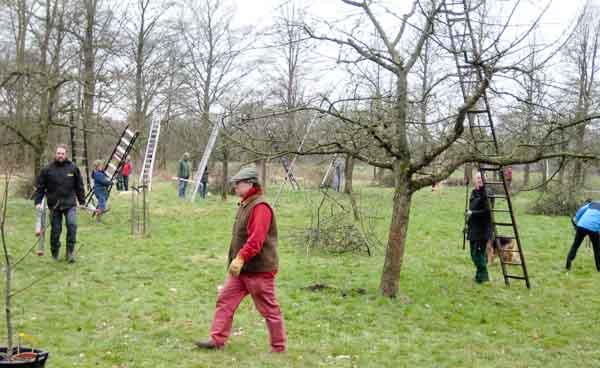 Hoogstambrigade restaureert bomen Sterkenburg