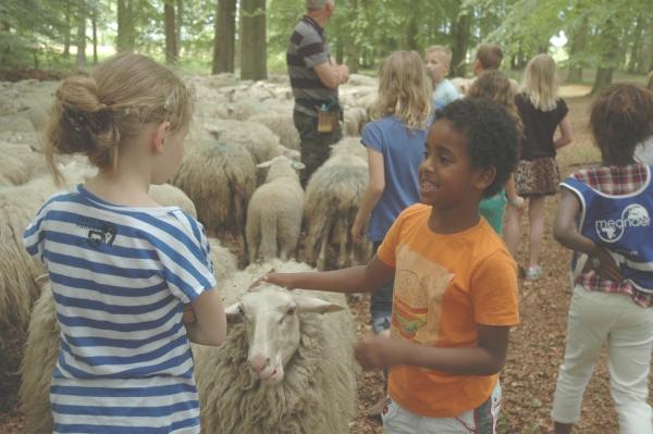 Basisscholen Leersum bezoeken schaapskudde op Zuylestein.