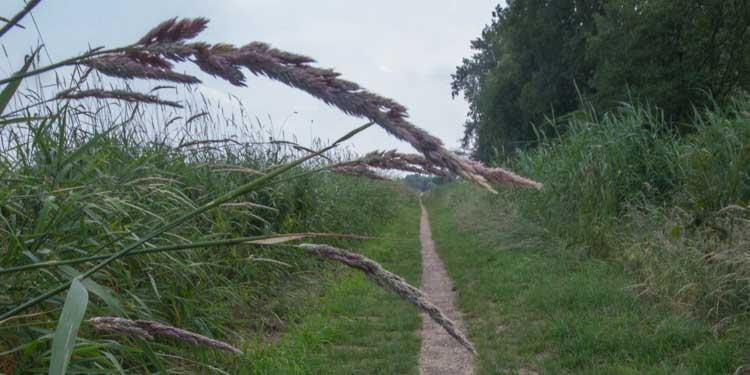 Utrecht(se Heuvelrug) scoort onverminderd hoog bij wandelaars